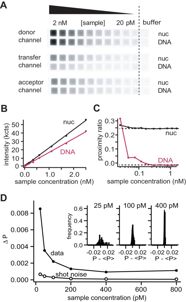 Characterization of microplate-scanning FRET spectroscopy (μpsFRET). A) μpsFRET grey scale images of a nucleosome sample (nuc) and a DNA fragment (DNA) at different sample concentrations (donor channel: excitation at 488 nm, detection at 500–540 nm; transfer channel: excitation at 488 nm, detection at 595–625 nm; acceptor channel: excitation at 532 nm, detection at 595–625 nm). Due to the absence of FRET, the DNA sample has a lower signal in the transfer channel. Concentrations are (from left to right): 2.5 nM, 1.7 nM, 1.1 nM, 600 pM, 350 pM, 180 pM, 120 pM, 70 p M, 40 pM, 20 pM, The last row to the right contained pure buffer solution. B ) A plot showing the integrated fluorescence signal (donor channel + transfer channel) as a function of sample concentration. The measured intensity is linear throughout the dilution series. Concentrations below 50 pM can still be distinguished from background. C ) A plot showing calculated P-values of nucleosomes and DNA as a function of sample concentration. For both samples P-values were consistent at larger concentrations, while for DNA P deviated at concentrations lower than 200 pM. Nucleosomal P-values were consistent to slightly lower concentrations (100 pM). D ) Noise analysis of P-values from a donor-only sample under sub-nanomolar concentrations. Black circles are experimental standard deviations from 25 wells, white circles show estimated shot noise values. The low signal to noise level at lowest concentrations results in a large well-to-well variation in P. Shot noise accounts for