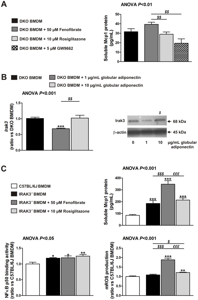 Adiponectin-induced Irak3 plays an important role in rosiglitazone-mediated decrease of Mcp1. ( A ) Soluble Mcp1 protein levels in DKO BMDM exposed to 50 µM fenofibrate, 10 µM rosiglitazone or 5 µM GW9662 for 24 hours as determined by ELISA. Data are means ± SEM; n = 16 from three different mice. $$ P