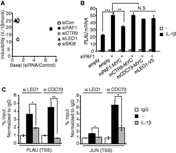 PAFc-associated PAF1 represses IL-1β–inducible genes. ( A ) Using data from Supplementary Figure S6B , the knockdown effect of individual PAFc components to IL-1β inducibility ( y -axis, relative ratio of PLAU mRNA with IL-1β to without IL-1β) and basal expression ( x -axis, relative ratio of PLAU mRNA with PAFc siRNA to control siRNA without IL-1β) are shown. ( B ) HepG2 cells were co-transfected with control or hPAF1 siRNA along with empty vector or indicated mPAFc expression vectors, and qRT–PCR for PLAU mRNA was performed. Bar indicates averages of data from three experiments; error bars represent SD. ( C ) ChIP analysis of CDC73 (as also known as parafibromin) and LEO1. HepG2 cells were stimulated with IL-1β (10 ng/ml) for 0 or 30 min. The specific protein occupancy at the target locus relative to the intergenic region was calculated and normalized to the IgG control. Bar indicates averages of data from two experiments; error bars represent standard deviation. 'N.S.' indicates not significant ( P > 0.05).