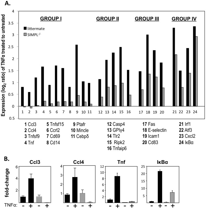 Identification of SIMPL-dependent genes. ( A ) Expression level of genes in TNFα treated as compared untreated MEFs derived from either littermate (▪) or SIMPL −/− ( ) mice. Genes are grouped according differences in TNFα responsiveness of treated SIMPL −/− derived as compared to littermate derived MEFs: complete loss (Group I); 75% reduction (Group II); 50% reduction (Group III) or a 25% reduction (Group IV). ( B ) MEFs derived from littermate (▪) or SIMPL −/− ( ) mice were treated with rhuTNFα (10 ng/ml) for 45 minutes, total RNA was isolated, converted to cDNA for analysis of indicated mRNAs by qRT-PCR.