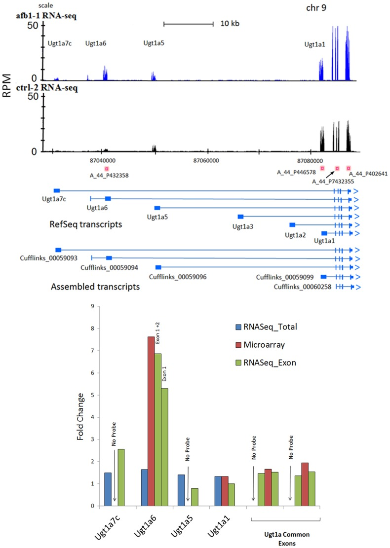Exon specific expression among homologous transcripts in the Ugt1a gene family. Panel A. The genomic region for Ugt1a transcripts is displayed on the X-axis in UCSC browser format where the Y-axis represents mapped reads in RPM units. Placements of microarray probes for specific transcripts are indicated by rose-colored boxes with probe names below. There are a total of four microarray probes, some of which correspond to shared exons of the Ugta1 gene family (A_44_P432355, A_44_P402641) or to specific exons defining Ugt1a1 (A_44_P446578) and Ugt1a6 (A_44_P432358) isoforms. RefSeq transcripts and Cufflinks assembled transcripts are displayed under the RNA-Seq tracks. Exons are shown as light blue blocks or bands; introns are lines between exons; arrows at the end of each transcript indicate direction of transcription. Panel B. Bar graph shows mean fold changes (AFB1/Control) on the Y axis for the entire RNA-Seq transcript (blue), the microarray probe (red) and the isoform-specific RNA-Seq_exon (green). For some exons, there was no corresponding microarray probe − 'No Probe' (e.g. Ugt1a5, Ugta1a7c). Exon-specific, RNA-Seq ratios were labeled by exon number. Ugt1a-Common consists of four exons (common to all Ugt1a isoforms) for which two microarray probes exist. Exon-specific ratios from RNA-Seq reads were calculated for Exons 1, 2, 3 and 4. RNA-Seq exon-specific reads were measured to calculate AFB1/Control ratios for Ugt1a1, Utgt1a5, both exons of Ugt1a6, and Ugt1a7c.