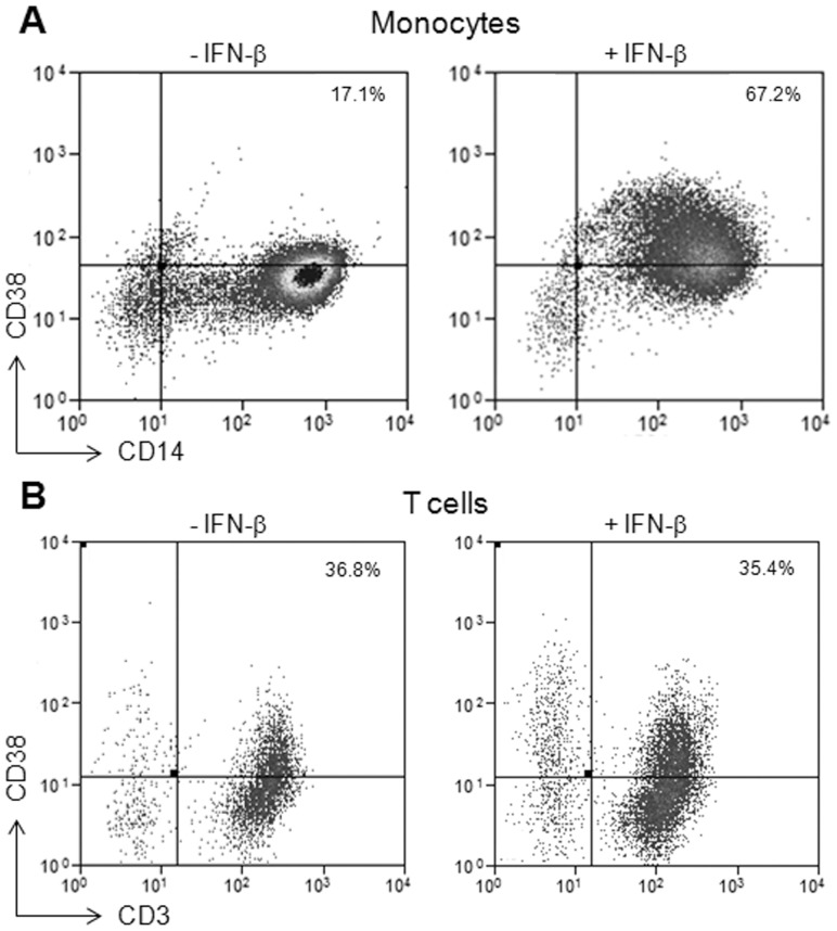 CD38 protein expression is increased in monocytes, but not in T cells, in response to IFN-β. Flow cytometry analysis of CD38 expression in monocytes and T cells incubated with TNF-α for 2 hours and then treated with IFN-β for 40 hours. Representative results of CD38 expression with and without IFN-β treatment in A. CD14+ monocytes and B. CD3+ T cells. N≥3 for each cell type.
