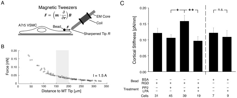 Cortical stiffness measurement in VSMCs. (A) Controlled force pulses generated by magnetic tweezers displace aortic VSMC-adherent, RGD-coated superparamagnetic beads (2.8 µm) to measure the stiffness of the bead-focal adhesion-cortical cytoskeleton linkage (see Methods ). The force F exerted on a bead depends on the induced magnetic moment in the bead m and the spatial gradient of the magnetic field B , which depends critically on the sharpness of the probe's tip, characterized by its radius of curvature R . (B) Calibration curve relating the force exerted on a bead (d = 2.8 µm) to its distance from the MT tip (R = 40 µm) and the current through the electromagnet solenoid (I = 1.5 A). The gray box denotes the operating range used for the MT experiments, i.e. the distance that is set between the MT tip and a bead before pulling commences. (C) Mean cortical stiffness increases with LPA stimulation in a PP2-attenuated manner. Right: BSA beads, which do not bind integrins but adhere nonspecifically, do not register an increase in stiffness with LPA. *p