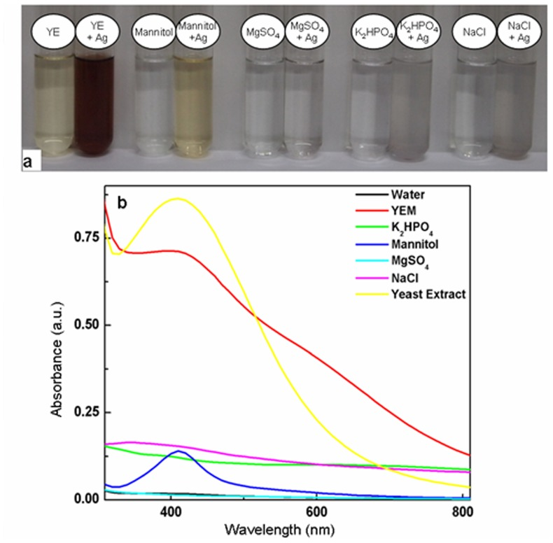 Evaluation of contribution of YEM medium components for silver nanoparticles generation upon autoclaving with AgNO 3 . a : Alteration in color of 0.25 mM AgNO 3 upon autoclaving with different components of YEM medium namely, yeast extract (YE), mannitol, <t>MgSO4,</t> <t>NaCl</t> and K2HPO4 medium individually. b : UV-Vis absorption spectra of 0.25 mM AgNO 3 after autoclaving with YEM medium, yeast extract, mannitol, MgSO4, NaCl and K2HPO4.