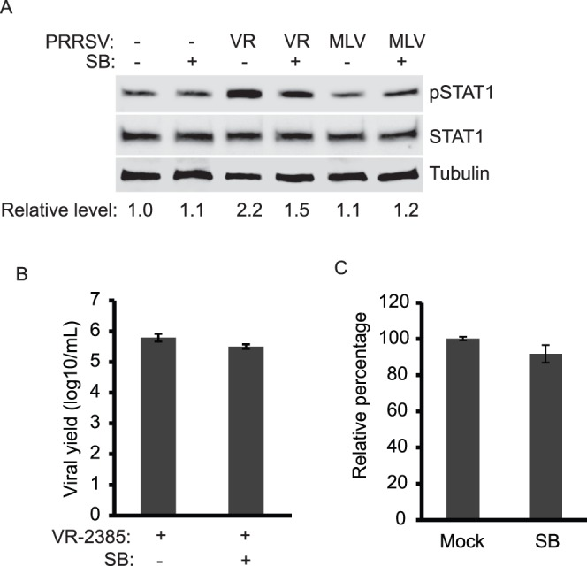 The p38 MARK signaling pathway is involved in pSTAT1-S727 elevation in PRRSV-infected cells. A. SB203580 treatment leads to inhibition of PRRSV-induced pSTAT1 elevation. MARC-145 cells were infected with PRRSV and treated with SB203580. At 24 hpi, the cells were harvested for Western blotting with antibodies against pSTAT1-S727, STAT1, and tubulin. B. PRRSV yield remains unchanged in the presence of SB203580. Cell culture supernatant samples of PRRSV-infected MARC-145 cells in the presence or absence of SB203580 were titrated. The viral yield is shown as log10 TCID50/ml. C. Cell viability assay of SB203580-treated MARC-145 cells. The cells were subjected for the assay 24 h after treatment. Relative percentages in comparison with mock-treated cells are shown.