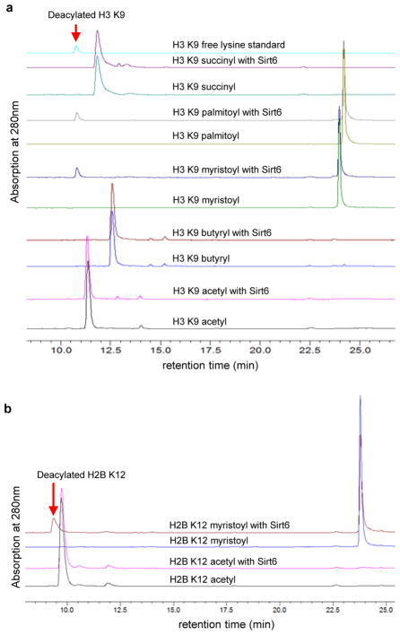 Sirt6 prefers to hydrolyze long chain fatty acyl lysine in vitro. (A) HPLC traces showing Sirt6-catalyzed hydrolysis of different acyl peptides based on the H3K9 sequence. (B) H2B K12 myristoyl peptide can be hydrolyzed by Sirt6 while the corresponding acetyl peptide cannot. Reactions were carried out with 50 μM peptide, 1 μM Sirt6, 20 mM Tris pH 8.0, 0.5 mM NAD, and 1 mM DTT at 37°C for 30 min.