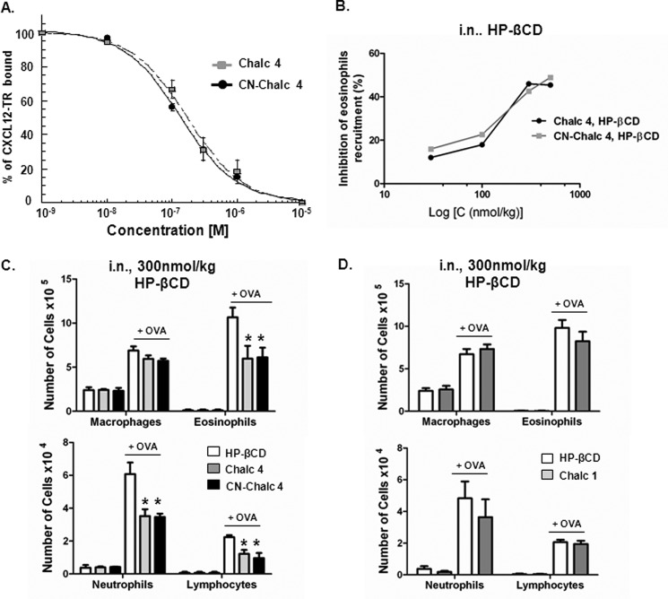 Carbonitrile-chalcone reduces inflammation in a mouse model of allergic eosinophilic airway inflammation. A , in vitro inhibition of CXCL12 binding to CXCR4 receptor by chalcone 4 ( Chalc 4 ) and CN-chalcone 4 ( CN-Chalc 4 ). Inhibition of CXCL12 binding to CXCR4 as a function of increasing concentration of chalcone 4 ( gray squares ) and CN-chalcone 4 ( black circles ) is monitored using FRET intensity variation. The fluorescence of cells expressing EGFP-labeled CXCR4 is followed at 510 nm as a function of time. Upon the addition of Texas Red-labeled CXCL12 ( CXCL12-TR , 100 n m ), fluorescence intensity at 510 nm declines as a result of interaction between CXCL12-TR and EGFP-CXCR4, which causes FRET. The ordinate axis reports the intensity of FRET as a percentage of the control value (100 n m CXCL12-TR alone). K i values were derived from the IC 50 values determined from competition curves using the Cheng and Prusoff relationship ( 65 ). K i values are 53 ± 31 n m (chalcone 4) and 45 ± 57 n m (CN-chalcone 4). Each data point represents the mean ± S.D. ( error bars ) of three experiments. B , in vivo dose-response effect of a topical treatment with chalcone 4 and CN-chalcone 4 in an 8-day mouse model of hypereosinophilia. BALB/c mice were sensitized and challenged with OVA or saline. Chalcone 4 ( gray line ) or CN-chalcone 4 ( black line ) solubilized in 10% HP-βCD were administered intranasally 2 h before each challenge. The percentage of inhibition of eosinophil is shown. Data points ( squares ) are means of n = 6 determinations. C and D , effect of topical (intranasal; i.n. ) treatment with chalcone 4, CN-chalcone 4 ( C ), and chalcone 1 ( Chalc 1 ) ( D ) in the 8-day mouse model of hypereosinophilia. BALB/c mice were sensitized and challenged with OVA or saline. Drugs (300 nmol/kg) were administered intranasally 2 h before each challenge in HP-βCD 10% (vehicle). Absolute numbers of macrophages, eosinophils, neutrophils, and lymphocytes in BALF are shown. Bars r