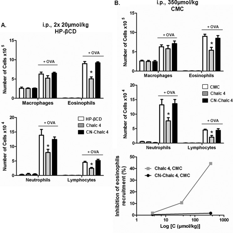 CN-chalcone 4 is an antedrug. Systemic effect of chalcone 4 and CN-chalcone 4 in two vehicles. Systemic (intraperitoneal ( i.p. )) treatment with chalcone 4 ( Chalc 4 ) and CN-chalcone 4 ( CN-Chalc 4 ) in the 8-day mouse model of hypereosinophilia is shown. BALB/c mice were sensitized and challenged with OVA or saline. Drugs (two administrations of 20 μmol/kg/day for 3 days in 10% HP-βCD (vehicle) ( A ) or 350 μmol/kg once a day for 3 days in 1% carboxymethylcellulose ( CMC ) as a vehicle ( B )) were administered intraperitoneally 2 h before each OVA challenge. Absolute numbers of macrophages, eosinophils ( top ), neutrophils, and lymphocytes ( middle ) in BALF are shown. Bars show means, and error bars show S.E. values ( n = 6/group). *, p ≤ 0.05 in comparison with the saline-treated OVA group. Dose intensity relationship of eosinophil recruitment in the intraperitoneal route is shown for chalcone 4 and CN-chalcone 4 up to the maximal dose ( bottom ).