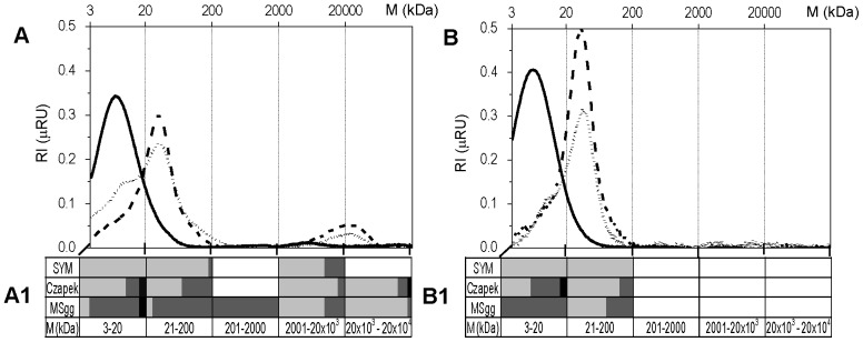Size exclusion liquid chromatography (HPSEC) representative chromatograms of EPS isolated from biofilm (A) and from spent medium below the biofilms (B) grown in three media. SYM (—––); Czapek (– – –), and MSgg (- - - - - -). The molecular weight (M) distributions were graphically split into five size fractions. Their chemical composition and relative abundance of polysaccharides (▪), proteins (▪) and nucleic acids (▪) in these size fractions is graphically represented in A1 and B1. Chemical composition of EPS size fractions was determined from RI (refractive index) chromatograms shown in A and B and from UV 280 and 260 nm chromatograms (not shown).