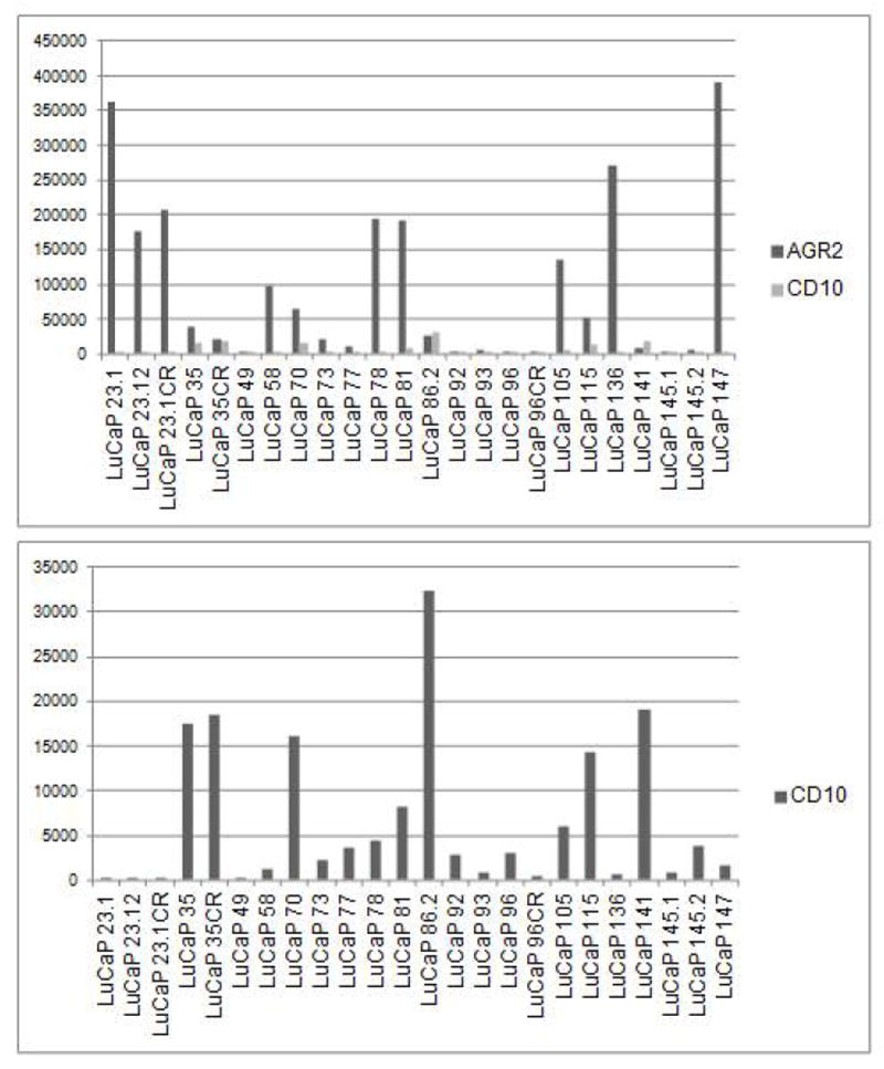Expression levels of AGR2 and CD10 in xenografts. As inferred from DNA microarray analysis, these levels are presented in histogram format (top). CY3 intensity values are indicated on the y -axis. Because of the lower values for CD10, a separate histogram for CD10 is included (bottom). Note the ~6-fold decrease in CD10 from LuCaP 96 to Lu CaP 96CR.