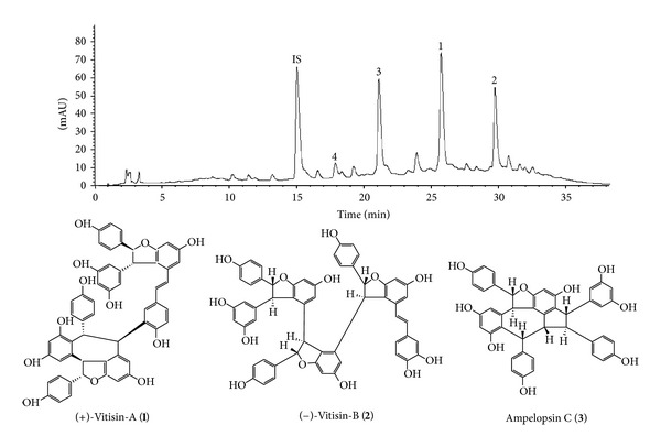 <t>HPLC</t> chromatograms of <t>VtR</t> and chemical structure of (+)-vitisin A ( 1 ), (−)-vitisin B ( 2 ), and ampelopsin C ( 3 ). Retention times for internal standard (4-hydroxy-3-methoxycinnamaldehyde, IS), ampelopsin C ( 3 ), (+)-vitisin A ( 1 ), and (−)-vitisin B ( 2 ) were 15.0, 21.1, 25.7, and 29.7 min, respectively. The traced component of peak 4 with a retention time of 17.9 min was resveratrol.
