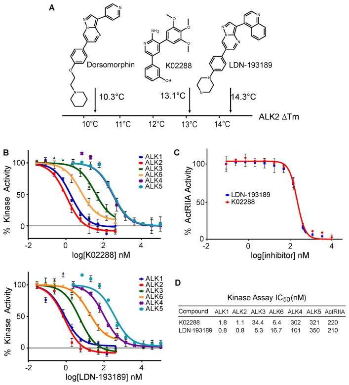 Identification of a novel 2-aminopyridine inhibitor of ALK2. (A) Schematic summary of a thermal shift assay screen using recombinant ALK2 kinase domain. A novel 2-aminopyridine hit K02288 was identified with an affinity for ALK2 intermediate between dorsomorphin and LDN-193189. Complete screening data are shown in supplemental Table S1 . (B) In vitro kinase assays showed K02288 specificity for ALK1,2,3,6 over ALK4,5. IC 50 measurements were performed in triplicate at the Km value of ATP. (C) ActRIIA kinase inhibition was determined using the Kinase-Glo® assay (Promega). IC 50 measurements were performed in duplicate at the Km value of ATP. (D) Summary of IC 50 measurements in all experiments.