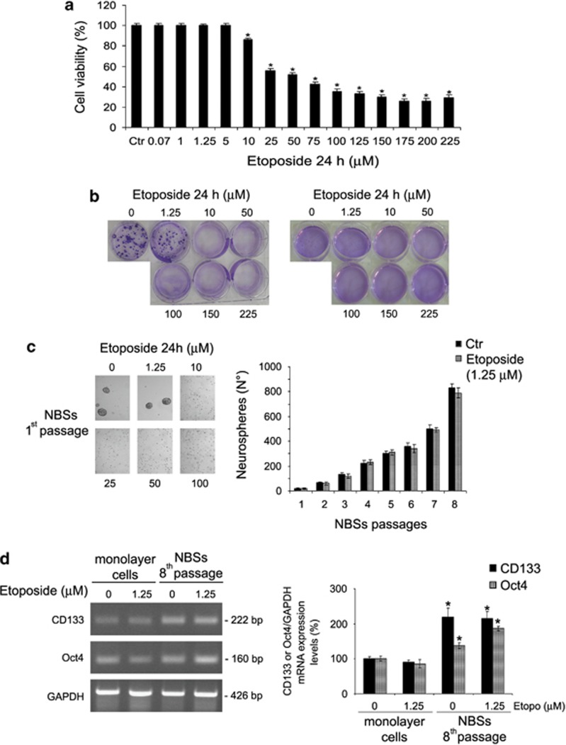 Etoposide decreases cell viability and, at high drug concentrations, inhibits the tumorigenic potential of HTLA-230 NB cells and prevents NBS formation. ( a ) Cell viability was determined by MTT assays in cells exposed to increasing concentrations of etoposide (0.07–225 μ M) for 24 h. Histograms summarize quantitative data of means±S.D. of five independent experiments. * P