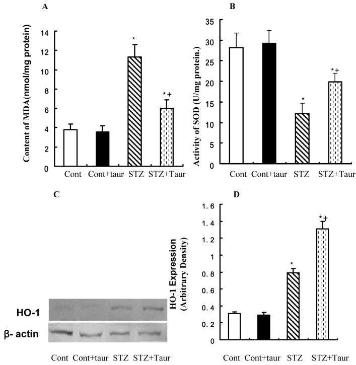 The levels of malondialdehyde and superoxide dismutase in cardiomyocyte from control and streptozotocin (STZ) diabetic rats treated with or without taurine (100 mg/kg). ( A ) malondialdehyde (MDA); ( B ) superoxide dismutase (SOD); ( C ) Representative gel blots of heme oxygenase-1 (HO-1) and β-actin (loading control) using specific antibodies; ( D ) HO-1 expression. Cont – control rats. Cont + taur – control rats with taurine. STZ – diabetic rats. STZ+taur – diabetic rats with taurine. The results are expressed as mean ± standard error of the mean. The number of animals per group was 8 for determination of MDA and HO-1 levels and SOD activity. * P