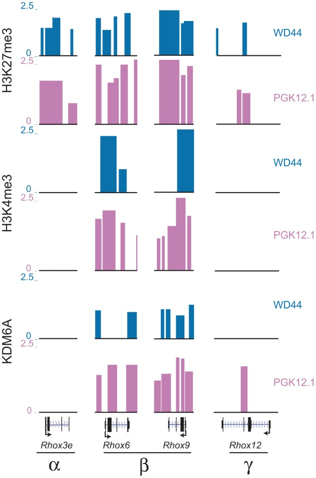 Rhox6 and 9 are bivalent and preferentially occupied by KDM6A in female ES cells. H3K27me3, H3K4me3 and KDM6A enrichment profiles in undifferentiated female PGK12.1 (pink) and male WD44 ES (blue) cells at representative genes from each Rhox subcluster (α, β, and γ) demonstrate that only Rhox6 and 9 are highly enriched with both histone modifications and are bound by KDM6A (see also Figure S6 ). Rhox3e (α cluster) is enriched in H3K27me3 but not H3K4me3 or KDM6A, and Rhox12 (γ cluster) shows little enrichment for the proteins analyzed. Significant enrichment peaks based on Nimblescan analysis (FDR score