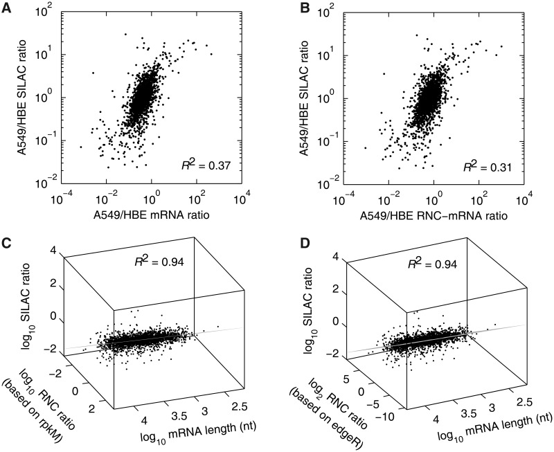 Multivariate linear correlation among the relative abundances of mRNA, RNC-mRNA and protein. ( A and B ) Bivariate correlation comparing mRNA (A) and RNC-mRNA ratios (A549/HBE) (B) with SILAC ratio (A549/HBE), respectively. ( C and D ) Multivariate linear model, fitting SILAC ratio (A549/HBE), mRNA length and RNC-mRNA ratio (A549/HBE), calculated based on rpkM (C) and edgeR (D) normalizations regarding RNA-seq data. The viewpoints were on the fitted planes.