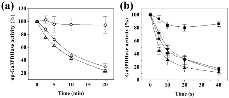 Inactivation of each triose-P DHase by H 2 O 2 in the presence of substrates. (a) Incubation of np -Ga3PDHase (100% activity of 21 U/mg) with 1 mM H 2 O 2 in the presence of none (Δ), 1 mM Ga3P (□) or 100 μM NADP + (◇). Oxidation was followed in time during 20 min at 25 °C; ( b ) Incubation of Ga3PDHase (100% of activity of 38 U/mg) with 0.5 mM H 2 O 2 in the presence of none (▲), 1 mM NAD + (●), 1.2 mM Ga3P (▼) or 1 mM NAD + plus 1.2 mM Ga3P (■). Oxidation was followed in time during 40 s at 25 °C. Error bars represent the values deviation in three independent assays.