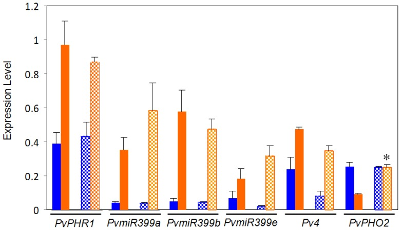 Expression of regulatory genes from the PvPHR1 signal pathway in roots of common bean BAT477 (solid bars) and DOR364 (hatched bars) genotypes. Plants were grown for three weeks under P sufficient (blue bars) or in P deficient (orange bars) conditions. Transcript levels were determined by qRT-PCR. Values are the mean (±SE) from three independent experiments with nine replicates per experiment. * Significantly different response to P deficiency between BAT477 and DOR364 ( p ≤ 0.05).