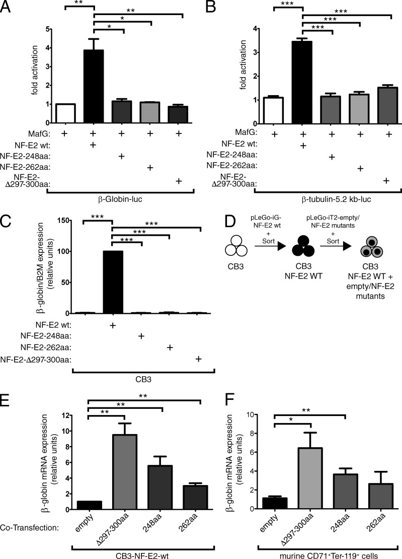 Transactivating activity of mutant NF-E2 proteins and their effect on WT NF-E2 activity. Plasmids encoding a β-globin promoter-luciferase construct (A; Igarashi et al., 1994 ) or a reporter construct encoding 5.2 kb of the β1-tubulin promoter coupled to the luciferase reporter gene (B) were cotransfected into HEK-293 cells either with expression vectors for MafG (white bars), WT NF-E2 (black bars), or various NF-E2 mutants (gray bars) as indicated. Luciferase activity was measured 16 h after transfection and normalized for transfection efficiency by determination of Renilla luciferase activity from a cotransfected vector. Activity of MafG alone was set at 1 and fold activity relative to this control is depicted. Bar graphs represent the mean ± SEM of four independent experiments, each performed in duplicate. Statistical analysis was done by one-way ANOVA with Bonferroni's post-hoc multiple comparison test. *, P