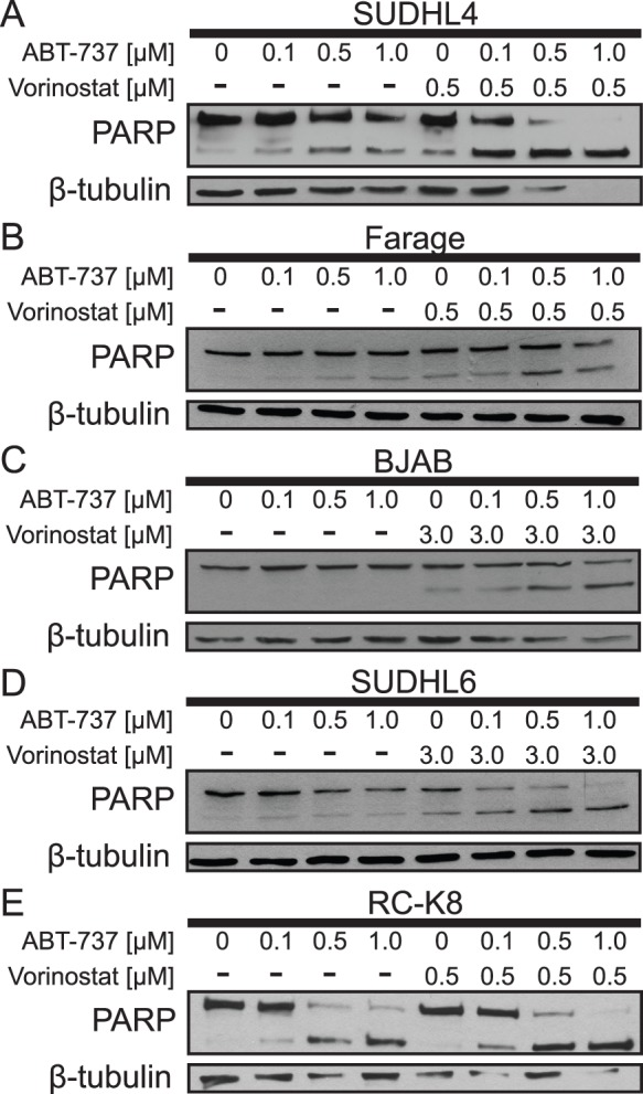 Vorinostat and the BH3 mimetic ABT-737 cooperate to increase apoptosis in DLBCL cell lines. ( A ) SUDHL4, ( B ) Farage, ( C ) BJAB, ( D ) SUDHL6, and ( E ) RC-K8 cells were treated with ABT-737 in a dose-dependent manner with and without a sub-optimal level (0.5 µM) or a higher concentration (3 µM) of vorinostat. Whole-cell extracts were subjected to Western blotting to assess PARP cleavage and β-tubulin levels (as a normalizing control).