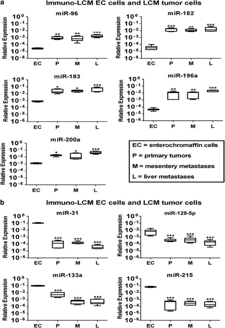 Quantitative real-time PCR (QRT-PCR) analysis validated the expression of nine selected microRNAs (miRNAs) from the first test group. Total RNA was isolated from microdissected tumor cells and microdissected normal enterochromaffin cells. Analysis was run using three normal enterochromaffin cell, three primary tumor, three mesentery metastasis and three liver metastasis samples. ( a ) Upregulated miRNA expression in tumor cells compared with normal enterochromaffin cells. ( b ) Downregulated miRNA expression in tumor cells compared with normal enterochromaffin cells. Results were plotted using the 2 −ΔΔCt method with RNU48 expression (set to 1) from each individual sample for normalization. Plotted results are mean±s.d. for triplicate wells. Significance was calculated by one-way analysis of variance (ANOVA) followed by Bonferroni test. * P