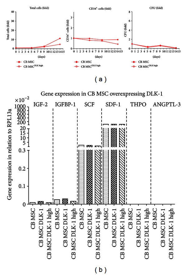 Effect of DLK-1-overexpression on the haematopoiesis-supporting capacity of CB MSC. (a) Exemplarily co-culture of CD34 + -cells on feeders of CB MSC and FACS-sorted CB MSC strongly overexpressing DLK-1 (CB MSC DLK high ) in multiple independent wells ( n = 4). Within 14 days, overexpression of DLK-1 did not have a beneficial effect on expansion rates of total cells, CD34 + -cells or CFU. In accordance to former results for native CB MSC, only a weak expansion of total cells was observed, while amounts of total CD34 + -cells as well as CFU slightly declined over time. (b) Expression levels of haematopoietic cytokines ( IGF-2 , IGFBP-1 , SCF , SDF-1 , THPO , ANGPTL-3 ) were analyzed by real time PCR exemplarily for a CB MSC line in native form, after induced overexpression of DLK-1 (CB MSC DLK ) as well as after further FACS-sorting for cells with high DLK-1 expression (CB MSC DLK high ), respectively. No significant differences in expression levels could be detected and results were in accordance with former data, as presented in Figure 4(b) .