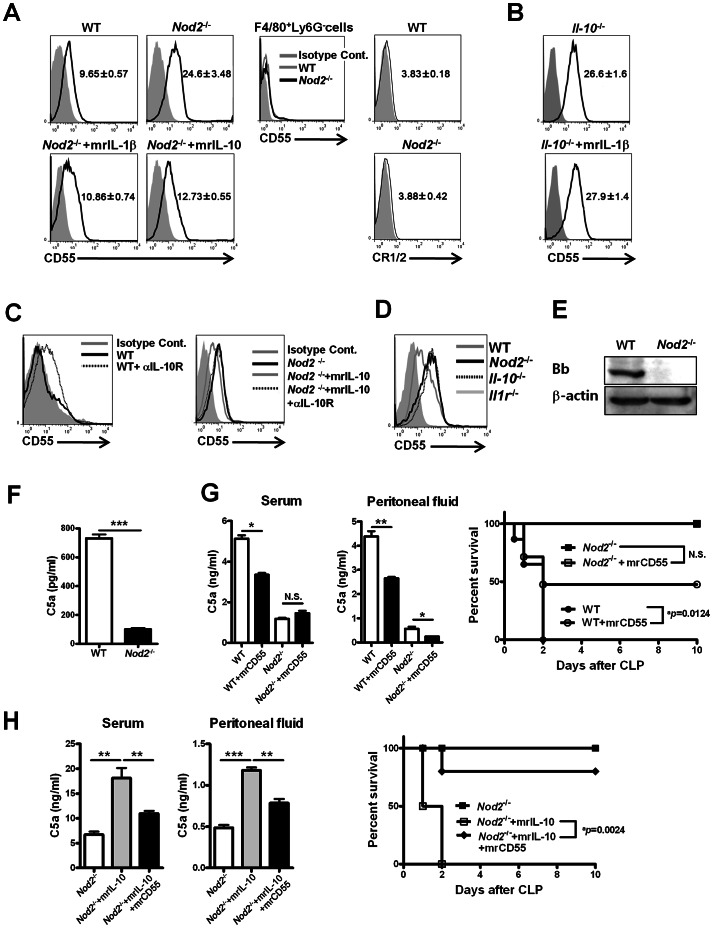 IL-1β-dependent IL-10 production mediated by nucleotide-binding oligomerization domain (NOD) 2 enhances C5a generation by suppressing CD55 expression on Ly6-G + cells during sepsis. (A) CD55 and CR1/2 expression on gated F4/80 − Ly6-G + peritoneal cells from WT, Nod2 −/− , and Nod2 −/− mice injected with recombinant IL-1β or IL-10 was estimated 24 h after CLP (mean fluorescence intensity [MFI] of CD55 expression in the panels). (B) CD55 expression on gated F4/80 − Ly6-G + peritoneal cells from Il-10 −/− or Il-10 −/− mice injected with recombinant IL-1β was estimated 24 h after CLP (MFI of CD55 expression in the panels) (C) To block IL-10 receptor engagement in vivo , anti-IL10 receptor mAbs were i.p. injected into WT and Nod2 −/− mice administered recombinant IL-10 during CLP-induced sepsis. CD55 expression on gated F4/80 − Ly6-G + peritoneal cells from these mice 24 h after CLP was evaluated. (D) The levels of CD55 expression on F4/80 − Ly6-G + peritoneal cells were compared in WT, Nod2 −/− , IL-10 −/− , and Il-1r −/− mice 24 h after CLP. (A–D) anti-CD55 mAb (lines) and control IgG (diagrams filled with gray) were used. (E) Peritoneal cells from WT and Nod2 −/− mice 24 h after CLP were blotted for Bb factor. (F) Peritoneal cells from WT and Nod2 −/− mice 12 h after CLP were incubated with RPMI media containing 10% WT mouse serum for 24 h. (G and H) To evaluate the effect of CD55 on C5a generation in vivo , WT, Nod2 −/− , (G) or Nod2 −/− mice given recombinant IL-10 (H) were i.p. injected with soluble CD55 12 h after CLP. Serum and peritoneal C5a levels and the survival percentages of these mice were measured during CLP-induced sepsis ( a P = 0.0124, log-rank test; WT [n = 8], Nod2 −/− [n = 8 ], and soluble CD55-injected WT [n = 6 ] or Nod2 −/− mice [n = 8 ] in G, a P = 0.0024, log-rank test; Nod2 −/− mice [n = 8], Nod2 −/− mice injected with recombinant IL-10 [n = 8] or recombinant IL-10 and soluble CD55 [n = 6] in H). *P
