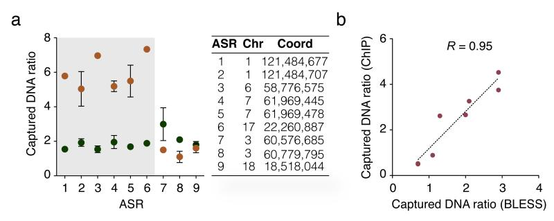 ASRs validation. ( a ) Fraction of input DNA captured by ChIP in regions with significant (grey highlight) vs. non-significant aphidicolin effect in HeLa cells treated (orange) or not (green) with aphidicolin. Mean ± s.d. are shown for n = 3 biological replicates. Genomic coordinates of amplicons analyzed by qPCR are reported. Chr: chromosome. Coord: genomic coordinate. ( b ) Comparison of aphidicolin effect measured by BLESS vs. ChIP in regions described in ( a ). Captured DNA ratio: ratio of captured DNA in aphidicolin-treated (A) vs. control (C) HeLa. R: Pearson's correlation coefficient.