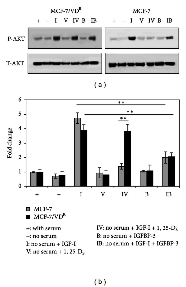 Differential modulation of IGF-induced Akt phosphorylation in response to 1, 25-D 3 and <t>IGFBP-3</t> treatment in MCF-7 and MCF-7/VD R cells. (a) MCF-7 and MCF-7/VD R cells were treated with 100 nM 1, 25-D 3 or 30 nM IGF-I, alone or in combination, in serum-free medium. Cells were also treated with 100 nM IGFBP-3 alone or in combination with 30 nM IGF-I in serum-free medium. After 5 days of treatment, whole cell extracts were prepared and analysed by immunoblotting for total-Akt (T-Akt) and phospho-Akt (P-Akt). (b) Densitometric analysis of immunoblots was performed using GS-800 Calibrated Densitometer (Bio-Rad UK). Data shown are representative of three identical experiments. Means of 3 separated experiments are shown. * P