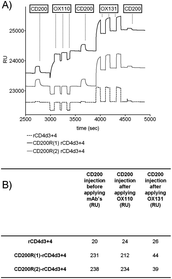 The CD200/CD200R interaction can be blocked by OX131 but not OX110 mAb. A) Biotinylated rCD4d3+4 (dashed line), CD200R(1) rCD4d3+d4 (solid black line) and CD200R(2) rCD4d3+4 (solid grey line) proteins were immobilized onto streptavidin coated CM5 chips (681, 726, 704 response units respectively). The changes in response units (RU) upon sequential injection of different soluble proteins (boxed and indicated by vertical dots) are shown. (Both antibodies were injected three consecutive times to ensure saturation on the immobilized proteins.) (B) Table showing the increase in response units upon injection of soluble CD200 compared to the pre-injection states for each flow cell. The values for the control rCD4d3+4 indicate the signal due to the high protein content of the CD200 sample.