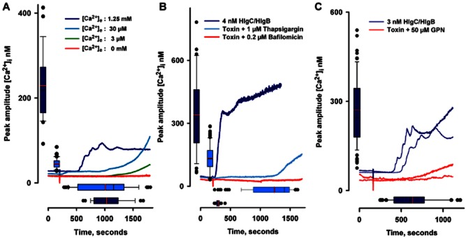 Both extracellular and intracellular Ca 2+ stores contribute to leukotoxin-induced [Ca 2+ ] i changes in cerebellar neurones. A. Averaged traces of four recordings obtained at different extracellular Ca 2+ concentrations ([Ca 2+ ] e ) showing that, in a Ca 2+ -free medium, neurones (35 cells) do not react to the presence of the leukotoxin. In low [Ca 2+ ] e (3 μM), an increase in free [Ca 2+ ] i can be observed (mean of 41 recorded neurones). Control recordings with 1.25 mM Ca 2+ (34 cells) are shown as well as recordings with 30 μM Ca 2+ (47 cells). The boxes show the distribution values for control and 30 μM Ca 2+ recordings. B. Average traces of cells recorded upon interruption of reticular Ca 2+ refilling by blockade of the SERCA pump (1 μM thapsigargin; two experiments, 66 cells) or upon interruption of acidic compartment Ca 2+ refilling through the blockade of H-ATPase (0.2 μM bafilomycin; two experiments, 80 cells). The boxes show the distribution values for control and thapsigargin recordings. C. Lysosomal destruction by 0.2 μM Glycyl-1-phenylalanine 2-naphthylamide (GPN) prevented leukotoxin-induced [Ca 2+ ] i changes. Two different experiments are shown where the mean of control traces are compared with the mean traces of neurones recorded after addition of GPN. The boxes correspond to the values of control recordings (87 cells). In all panels, the addition point of the toxin is indicated by a vertical stroke.
