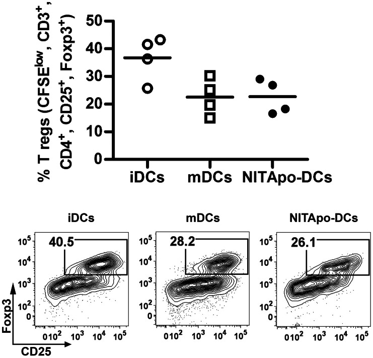 CD4+ <t>CD25+</t> FoxP3+ classical regulatory T cells subset in not increased by DCs after efferocytosis. Top: Percentage of proliferating CFSE low , CD3 + , CD4 + <t>,CD25</t> + , FoxP3 + regulatory T cells in autologous T cell proliferation assays with immature DCs (iDCs, white circles), mature DCs (mDCs, white squares) and DCs loaded with apoptotic cells (NITApo-DCs, black circles) with insulin (20 µg/ml) at a ratio of 1∶10 for 7 days. Plots show the mean (line) of four independent experiments. Double-sided Wilcoxon test was used for the evaluation of statistical significance. Bottom: Representative FACS plots showing CD25 + FoxP3 + regulatory T cells gated on CFSE low , CD3 + , CD4 + .