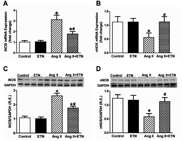Effect of central TNF blockade on iNOS and nNOS mRNA and protein expression in the PVN. Ang II-infused rats demonstrated an increase in the mRNA and protein expression of iNOS, and decrease in expression of nNOS within the PVN. These alterations were reversed by TNF blockade with ICV etanercept treatment. R.E. Relative expression, n = 8–12 per group, * p