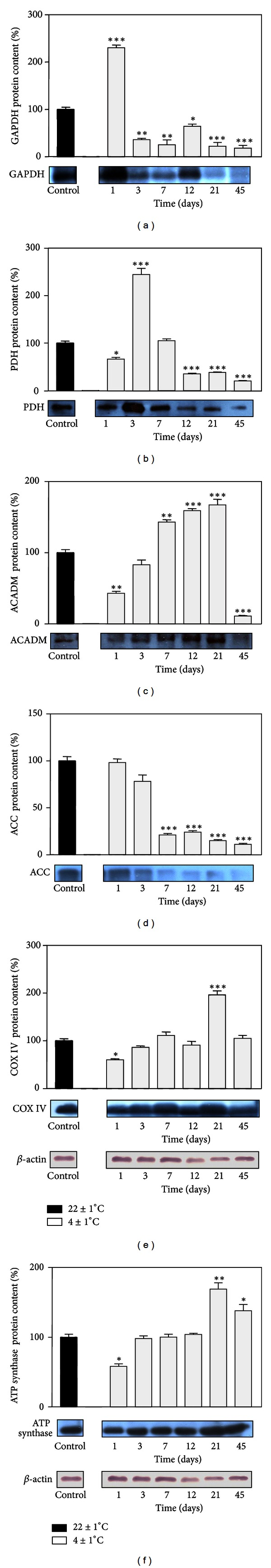 Changes in GAPDH (a), PDH (b), ACADM (c), ACC (d), subunit IV of cytochrome c oxidase (COX IV) (e), and <t>ATP</t> <t>synthase</t> (f) protein levels in rat retroperitoneal depot of white fat tissue after different time periods of cold exposure. Protein content is expressed relative to the control maintained at ro om temperature, which was standardized as 100%. The results of the representative example from three observations are shown. Data were quantified as described in Section 2 . The values represent the mean ± S.E.M. *Compared to control, * P