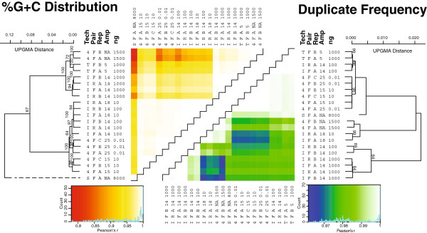 """%G + C and duplication plots for Experiment 1 metagenomes. Heatmap coloring indicates the relative pairwise correlations (Pearson's r) in the %G + C distributions (red-to-yellow) and duplicates (blue-to-green) where red and blue colors indicate the lowest levels of correlation, while white represents highly correlated data. The %G + C distribution correlations were UPGMA clustered with 100 bootstrap runs to indicate statistical support (only > 60% support shown). Abbreviations are as follows: """"Tech"""" is sequencing technology represented by 4 (454), T (Ion Torrent), I (Illumina), S (Sanger); """"Pair"""" is the forward or reverse paired end sequence data; """"Rep"""" is the arbitrarily labeled replicate ranging from two ( A and B ) to three ( A , B , or C ); """"ng"""" is the nanograms of input DNA from which the viral metagenome was derived. The most reliable estimate of the true %G + C distribution is the unamplified 454 metagenomes. Relative to these, fosmid end sequences generated using Sanger sequencing were the most shifted toward high %G + C, while problematic"""