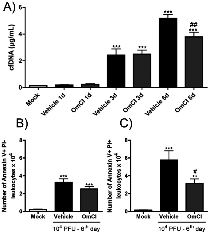 Effects of OmCI on cfDNA levels and number of dead cells in BALF after IAV infection. C57BL/6J mice were infected and assigned to treatment groups as in Figure 2 . At1, 3 and 6 days after infection, mice were euthanized and BAL was performed. A) Cell free DNA (cfDNA) levels were measured in BALF by the Quant-iT PicoGreen dsDNA quantification kit. At six days after infection, leukocytes recovered from airways of Mock, Vehicle and OmCI treated mice were analyzed for cellular death by Annexin V and PI incorporation. B) Total apoptotic leukocytes, Annexin V+ PI-, in BALF; C) Total necrotic or late apoptotic leukocytes, Annexin V+ PI+, in BALF. Data are presented as Mean ± SEM. ** and *** for p