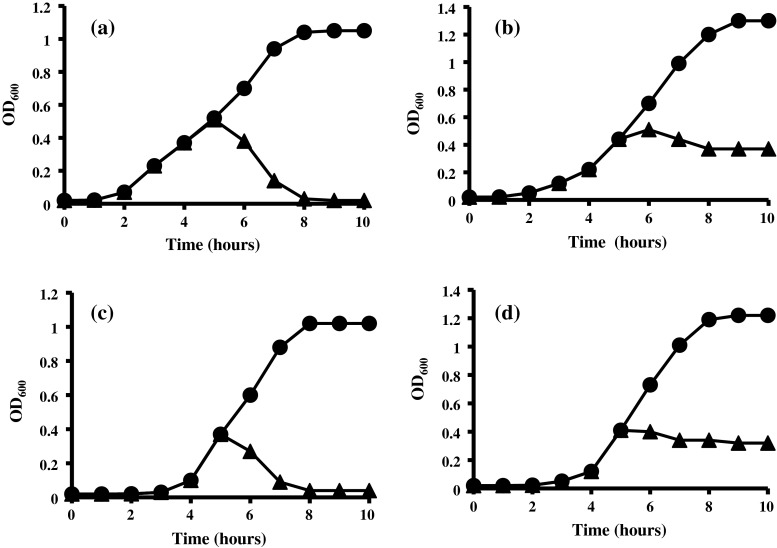 Effects of 80 AU ml −1  of purified antimicrobial peptide AN5-1 produced by  P. alvei  AN5 on early exponential growth phase against target strains:  a E. coli  ATCC 29522,  b S. marcescens ,  c S. aureus  and  d B. cereus  ATCC 14579, in the absence ( filled circle ) and presence ( filled triangle ) of antimicrobial peptide AN5-1. The bacterial growth was measured by means of optical density at 600nm (OD 600 )
