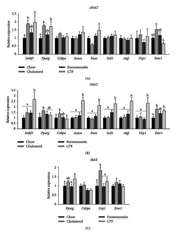 Adipocyte gene expression in C57BL/6 mice fed chow, cholesterol, or cholesterol supplemented formononetin or 2-heptyl-formonetin (C7F) for five weeks (Experiment 2). Gene expression measured by RT-PCR of Srebf1 (sterol regulatory element-binding protein-1c), Pparg (peroxisome proliferator-activated receptor γ ), Cebpa (CCAAT/enhancer-binding protein α ), Acaca (acyl-CoA carboxylase 1), Fasn (fatty acid synthase), Scd1 (stearoyl-CoA desaturase 1), Atgl (adipose triglyceride lipase), Ucp1 (uncoupling protein 1), and Emr1 (F4/80) in (A) eWAT, (B) iWAT, and (C) iBAT measured by RT-PCR. Data is normalised to 18S ribosomal RNA and presented relative to the expression in chow ( n = 6). Graphs show mean ± SEM. Different letters (a, b) denote significant difference ( P ≤ 0.5) between the groups.