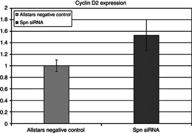 Cyclin D2 expression increased about 1.5-fold after 48 h of treatment with Spn -targeting siRNA compared with the reference Allstars negative control.