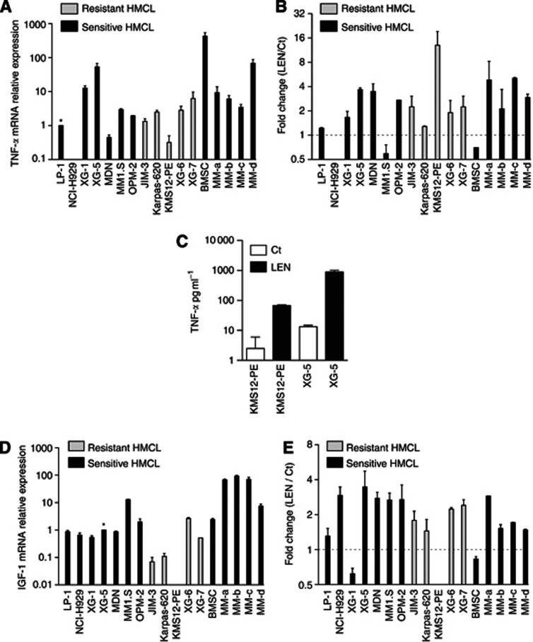 Lenalidomide modulates cytokines and IGF-1 profiles in myeloma cells. ( A ) Expression of TNF- α mRNA in myeloma cells and BMSC. ( B ) Modulation of TNF- α mRNA induced by LEN treatment in myeloma cells and BMSC. Human myeloma cell lines, primary CD138+ MM cells and BMSCs were incubated with or without 10 μ ℳ LEN for 24 h. Total RNA was extracted and reverse-transcribed as described previously. Tumour necrosis factor- α mRNA levels were evaluated by real-time PCR using the TaqMan probe Hs00174128-m1 (Applied Biosystem). The relative expression of TNF- α mRNA was calculated according to the equation of Pfaffl and normalised to LP1. Graphs represent the mean±s.d. of mRNA levels from two independent experiments performed in duplicate. ( C ) Increase of TNF- α production by LEN in myeloma cell lines. ( D ) Expression of IGF-1 mRNA in myeloma cells and BMSCs. ( E ) Increase in IGF-1 mRNA levels under LEN treatment. Insulin-like growth factor-1 mRNA levels were evaluated as above using the TaqMan gene expression assay Hs 00153126-m1. Graphs represent the mean±s.d. of mRNA levels from two independent experiments performed in duplicate.