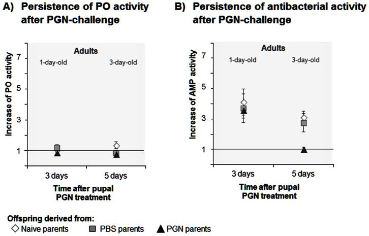 Persistence of transgenerational immune priming effects on the increase of immune activity of Manduca sexta offspring after offspring immune challenge by <t>PGN</t> in 21-day-old pupae. A) Increase of phenoloxidase (PO) activity and B) increase of antibacterial (AMP) activity (lysozyme activity equivalent, Micrococcus <t>luteus</t> ) were measured in 1-day-old and 3-day-old adults, i.e. three and five days, respectively, after offspring immune treatment in 21-day-old pupae. Female and male parents received a priming treatment in their pupal stage: Naive) untreated, PBS) control-injected with phosphate buffered saline, PGN) injected with peptidoglycan. If the symbol for offspring of naive parents is not visible, it is overlaid by another symbol. Increase of immune activity was measured as increase = (Activity after PGN treatment of the offspring)/(Mean activity of unchallenged offspring); value 1 is labelled by a line that indicates no change in immune activity after offspring challenge. Please note the comparable scales for increases which show the immunity and visualise the strong priming effects on offspring AMP activity, but the lack of effects on PO activity in the offspring. Mean values ± SE are given. N = 9 individuals of each developmental stage from each parental group. Means of absolute data of PGN- and PBS-treated offspring are shown in Table S5 in File S1 . Differences between the parental priming treatments and the time intervals after offspring PGN treatment were compared by two-way ANOVA ( Table 3 ) and post hoc analysis Tukey tests (Table S7 in File S1 ). Statistical evaluation of priming effects on the persistence of immunity after offspring immune challenge by PBS is shown in Table S8 in File S1 .
