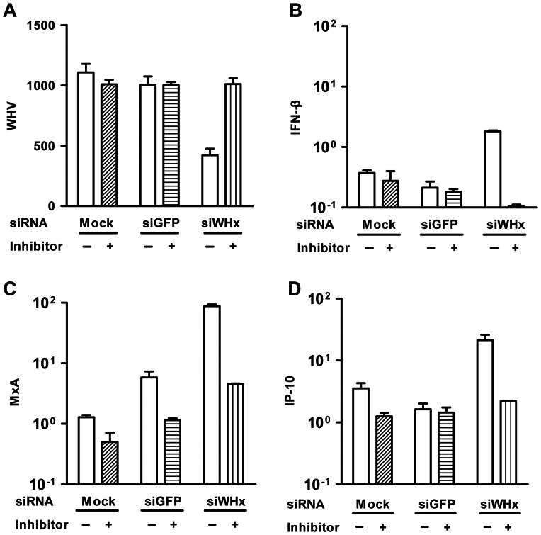 Inhibition of siRNA blocked the siWHx-mediated induction of IFN-β, MxA, and IP-10. PMHs isolated from WHV Tg mice were transfected with 100 nM of siWHx or cotransfected with 100 nM of siWHx and 100 nM of siWHx specific inhibitor (2′-O-methyl antisense RNA), and the mRNA levels of WHV and mouse IFN-β, MxA, and IP-10 were determined by real-time RT-PCR 48 h posttransfection.