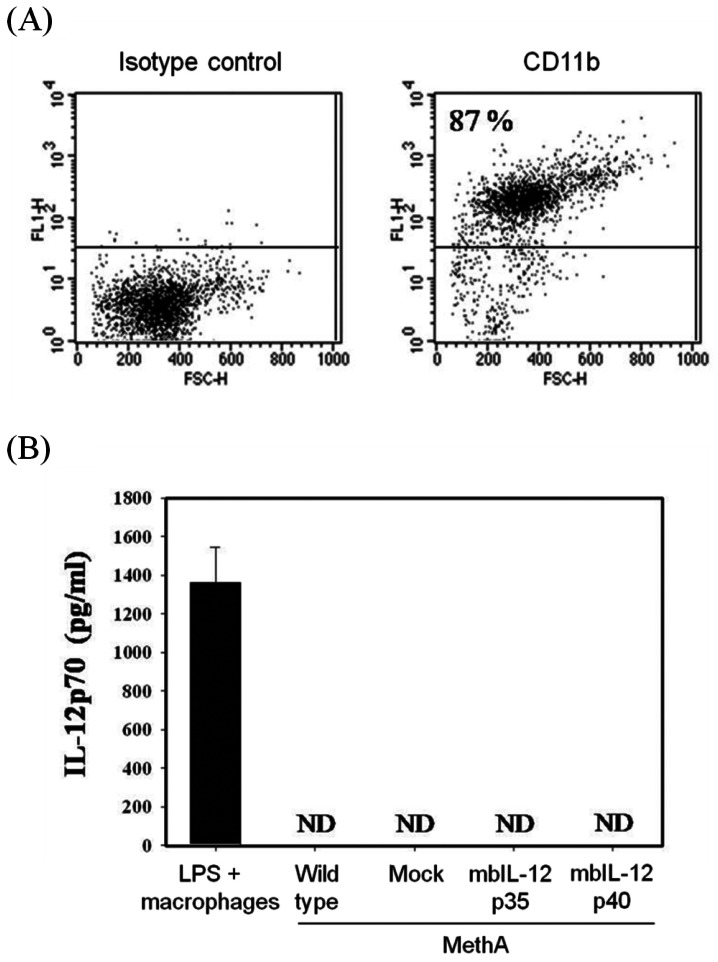 The mbIL-12p35 and the mbIL-12p40 molecules on transfected tumor clones are not released. (A) The isolated mouse peritoneal macrophages were stained with specific antibody to CD11b and analyzed by FACS. (B) Cells (5×10 5 cells) of the wild type, mock vector transfected, mbIL-12p35, and mbIL-12p40 transfected clones were cultured for 48 hr in 2 ml normal medium, and then culture supernatants were analyzed for IL-12 by ELISA. As a positive control, culture supernatant from LPS (2µg/ml)-treated mouse peritoneal macrophages was used. ND, not detected.