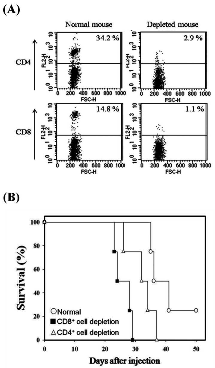 Survival of T cell subset-depleted mice injected with mbIL-12p35 expressing tumor clone. To deplete CD4 + or CD8 + T cells in vivo , mice were injected with antibodies specific to CD4 (GK1.5, 200µg/time) or CD8 (53-6.72, 200µg/time) intraperitoneally on days -3, 0, 3, 7, respectively. The depletion of CD4 + or CD8 + T cells was confirmed by FACS analysis of peripheral blood cells from the mice (A). CD4 + or CD8 + T cell-depleted mice were injected with 5×10 5 cells of mbIL-12p35 expressing tumor clone subcutaneously, and survival (B) were monitored.
