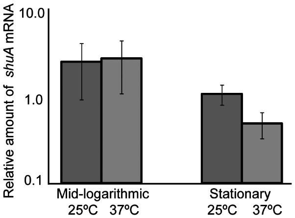shuA mRNA levels are not significantly altered by changes in environmental temperature. Quantitative Real-time PCR was conducted using RNA extracted from wild-type S. dysenteriae cultured to the mid-logarithmic or stationary phases of growth in LB broth containing 200 µg/mL EDDHA at 25°C and 37°C. shuA mRNA levels were normalized to the amount of rrsA , a constitutively expressed gene, in each sample and expressed relative to the amount of shuA transcript measured in the first 25°C sample at stationary phase. These data are the average of three biological replicates and error bars represent one standard deviation. Assuming a confidence interval of 95% (p≤0.05), no significant difference exists between the relative amounts of shuA mRNA measured at 25°C and 37°C.