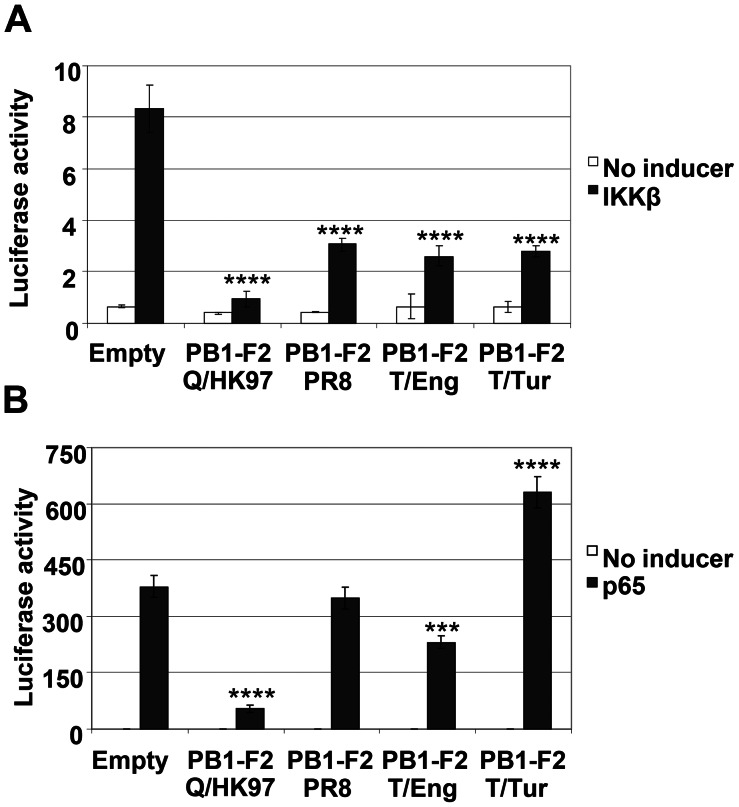 PB1-F2 proteins from different influenza isolates inhibit NF-κB activation induced by IKKβ overexpression. Vero cells were co-transfected with the NF-κB reporter and either each of the different PB1-F2 expression vectors or the empty pcDNA4 plasmid, the β-galactosidase control plasmid and 100 ng of pcDNA3-IKKβ (A) or 5 ng of pcDNA3-p65 (B). Forty eight hours post-transfection, the cells were lysed and the luciferase and galactosidase activities were measured. Data are representative of at least 3 independent experiments. Bars represent average values and standard deviations of firefly luciferase activities from triplicate samples normalized to the expression of galactosidase. Asterisks indicate results significantly different from control empty vector (one-way ANOVA followed by Dunnett's test; ***, P≤0.001; ****, P≤0.0001).