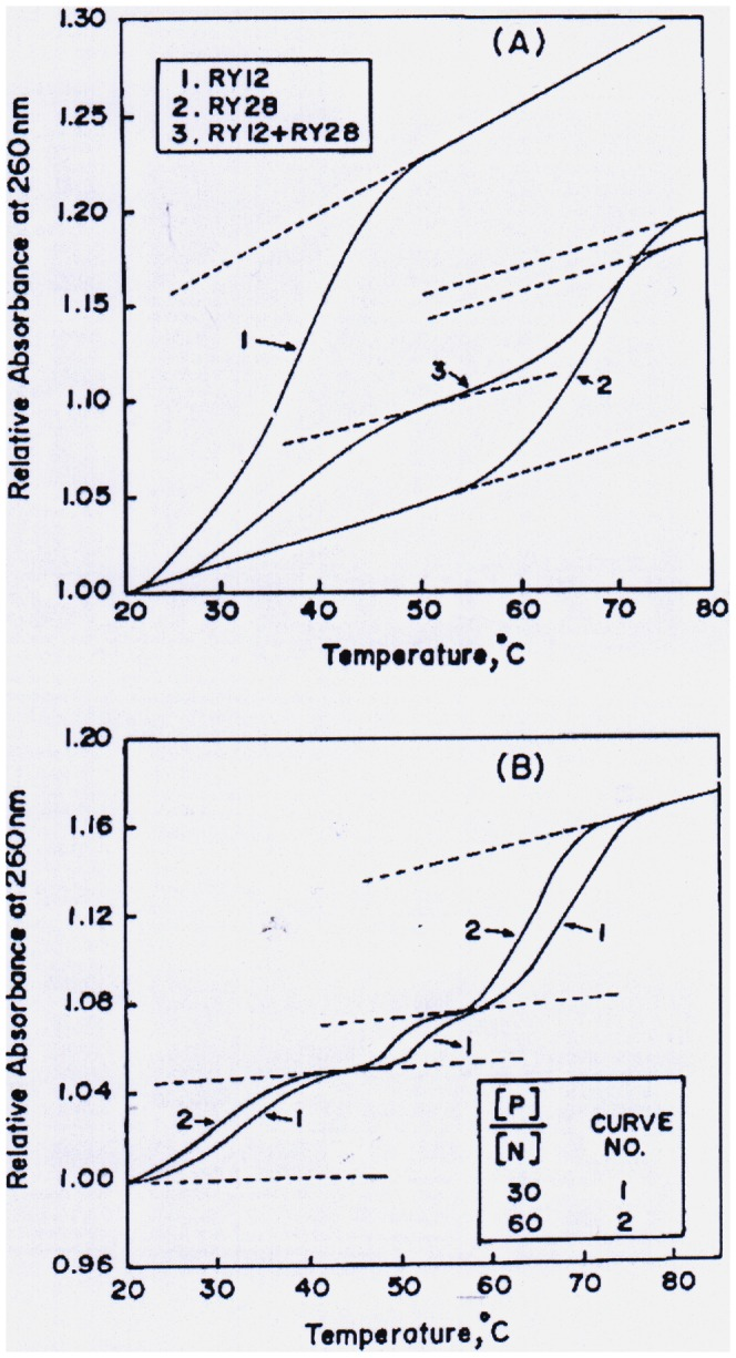 Melting profiles of oligonucleotides RY12 and RY28 and their mixtures in the presence and absence of pentapeptide REWER. A ) Heat-induced denaturation of the RY12 duplex (curve 1), RY28 hairpin (curve 2) and equimolar mixture of RY12 and RY28. B ) Melting curves of equimolar mixtures of RY12 and RY28 in the presence of the peptide REWER at the [P]/[N] ratio of 30 (curve 1) and 60 (curve 2). To maintain clarity melting curves at other [P]/[N] ratios are not shown.