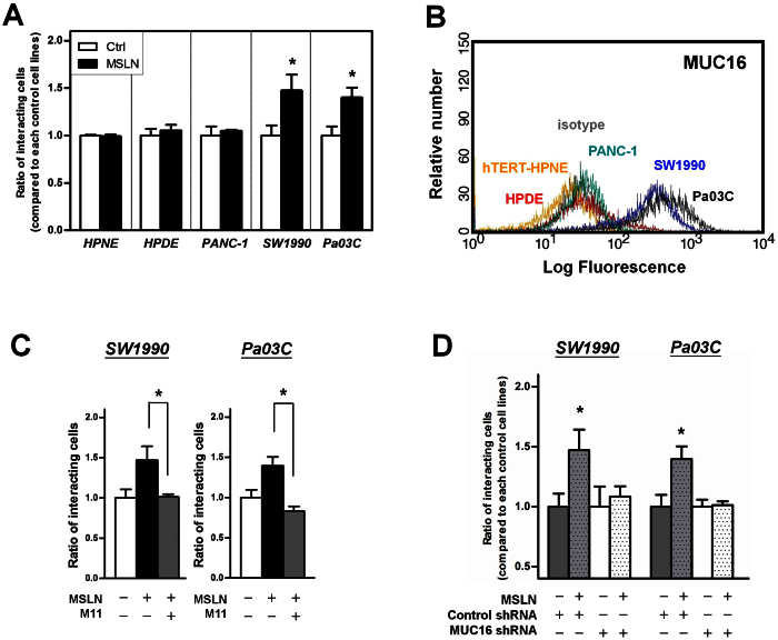 MUC16 expression correlates with pancreatic cancer cell binding capacity to MSLN. (A) hTERT-HPNE, HPDE, PANC-1, SW1990, and Pa03C cells were seeded in 96-well plates pre-coated with either mesothelin (MSLN) or BSA (control). After 30 min of incubation, the relative number of adherent cells to MSLN- versus BSA-coated wells was quantified by WST-1 assay. Data represent the mean ± S.E. of three independent experiments. *, p