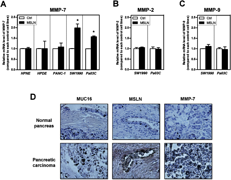 <t>MUC16</t> expression correlates with <t>MSLN-mediated</t> MMP-7 induction in pancreatic cancer cells. hTERT-HPNE, HPDE, PANC-1, SW1990, and Pa03C cells were starved in serum-free medium and incubated in the presence or absence of MSLN (1 μg/ml) overnight. (A) MMP-7, (B) MMP-2, and (C) MMP-9 mRNA levels were then determined by qRT-PCR. GAPDH served as internal control. Data represent the mean ± S.E. of at least three independent experiments. *, p