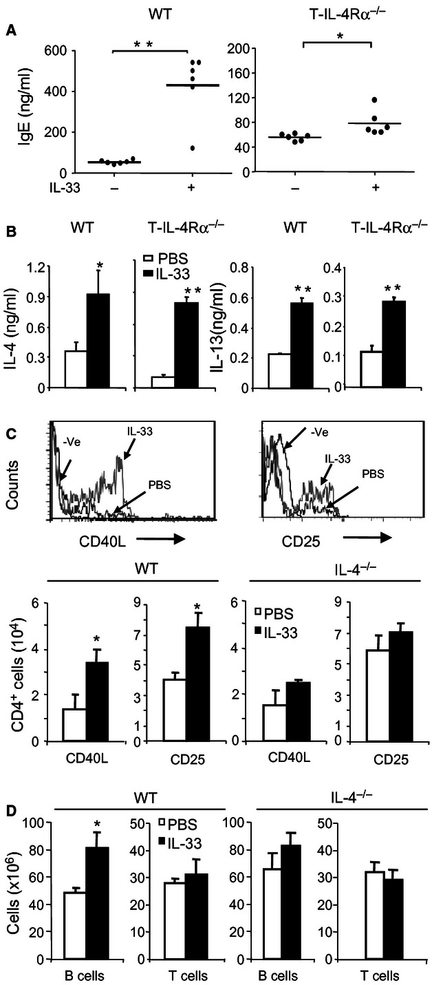 IL-4Rα T cells contribute to IL-33-induced IgE synthesis. Wild-type (WT), IL-4 −/− or T-IL-4Rα −/− mice were treated with IL-33. (A) Serum IgE and (B) IL-4 and IL-13 concentrations were measured by ELISA. (C) The levels of CD40L and CD25 on CD4 + T cells and the number of CD4 + CD40L + , CD4 + CD25 + T cells in the spleen of WT and IL-4 −/− mice were determined by FACScan and differential counting. (D) Total CD4 + T and CD19 + B cells in the spleen of WT and IL-4 −/− mice were determined by differential cell count. Data are from two experiments, n = 6 mice per group, * P